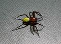 IKAl 20131109 Spinne.jpg