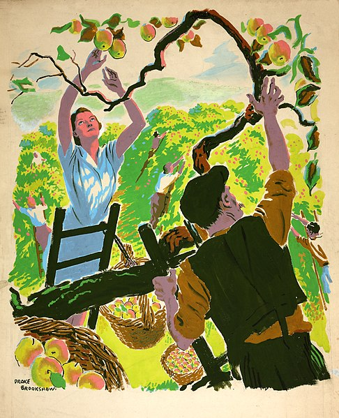 File:INF3-109 Food Production Apple picking Artist Drake Brookshaw.jpg