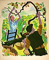 INF3-109 Food Production Apple picking Artist Drake Brookshaw.jpg