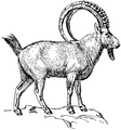 Ibex (PSF).png