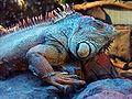 Iguana BuinZoo.jpg