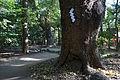 Ikuta-jinja Kobe11bs4272.jpg