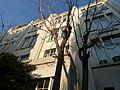 Immeuble du 26 rue des Plantes Paris 14ème.JPG