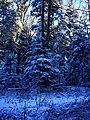 Innocent Surface - panoramio.jpg