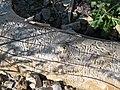Insect borings in wood (Cedar Canyon, Utah, USA) (25217957358).jpg