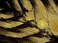 Interwoven golden velvet - leaf bases on my Triangle palm tree. - panoramio.jpg