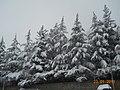 Inverno 2010-2011 - panoramio.jpg