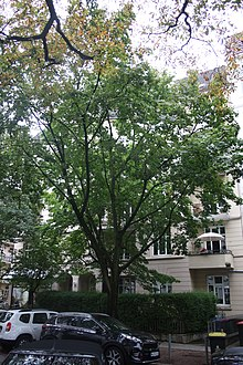 Isestraße 95 Wikipedia