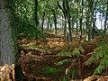 Islands Thorns Inclosure - geograph.org.uk - 264411.jpg