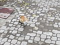 Istanbul, Turkey (10582765795).jpg