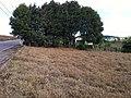 Itupeva - panoramio (149).jpg