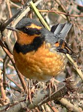 List of birds of Oregon - Wikipedia
