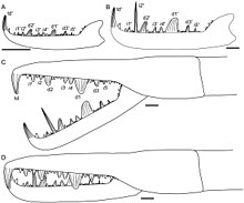Illustrations of the claws of Jaekelopterus