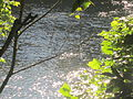 James River hidden by trees in Lynchburg, VA IMG 4100.JPG