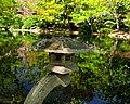 Japanese Lantern, FWJG.jpg