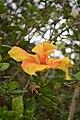 Jardim Botânico da Madeira DSC 0349 (14513234290).jpg
