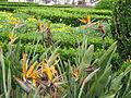 Jardim Botanico da Ajuda (14005573802).jpg