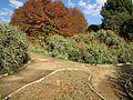 Johannesburg Botanical Garden Succulent02.JPG
