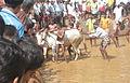 Kaalapoottu-arimbra-malappuram-bbc story3.jpg