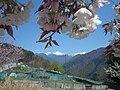 Kamimura, Iida, Nagano Prefecture 399-1403, Japan - panoramio.jpg