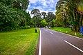 Kebun Raya Bogor 03.jpg