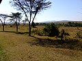 Keekorok 2013 - panoramio (11).jpg