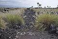 King's Trail in Kailua-Kona.jpg