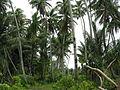 Kiribati(118).JPG