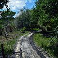 Kissimmee Prairie Preserve State Park Florida - Kilpatrick Hammock Trail.jpg