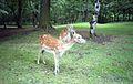 Knowsley Safari Park, Prescot - panoramio (2).jpg