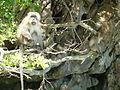 Ko Phi Phi P1120711.JPG