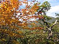 Korea-Mountain-Jirisan-23.jpg