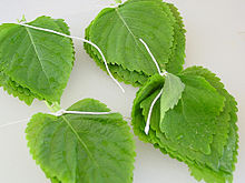 Korean perilla leaves.jpg