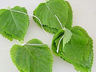 Perilla - Kkaennip, the edible leaves of Perilla frutescens (P. frutescens)