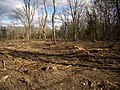 Kost Oak Savanna OW cleanup autumn 2007.jpg