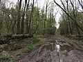 Krasnyy Khutir forest12.jpg