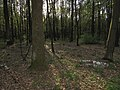 Krasnyy Khutir forest6.jpg