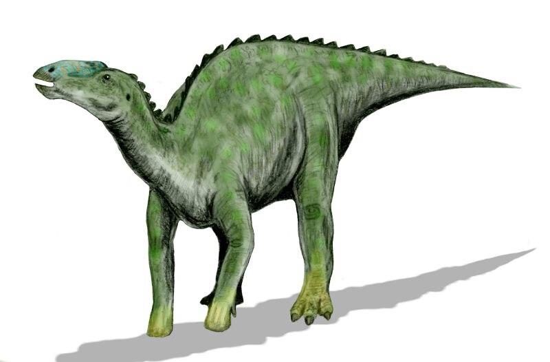 Kritosaurus BW