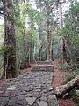 Kumano Kodo pilgrimage route Daimon-zaka World heritage 熊野古道 大門坂23.JPG