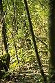 Kurcaparti tanösvény Mindszent - panoramio.jpg