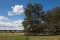 Kveten npr brouskuv mlyn 09.jpg
