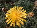 Kwiatek 45.jpg