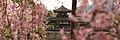 Kyoto banner cherry blossoms 4.jpg