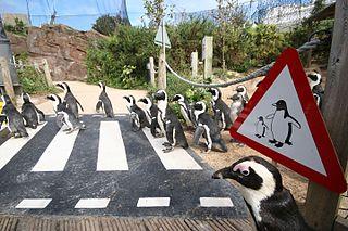 zoo in Devon, England