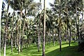 LORO Parque - panoramio (2).jpg