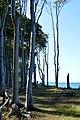 LSG Kühlung - Nienhäger Holz (Gespensterwald) (123).jpg