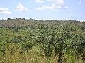 La Savana - panoramio.jpg