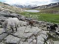 Lac de Nino with horses.JPG