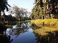 Lago, Parque do Inhotim.jpg