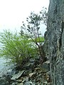 Lago Puelo - panoramio - littletroll (1).jpg